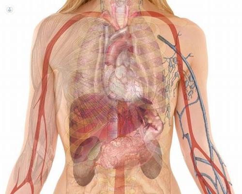La cirugía hepatobiliar se encarga de las patologías del hígado, vesícula y vías biliares, así como el páncreas - Top Doctors